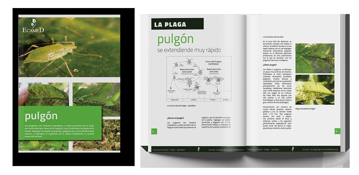 Soluciones Ecamed - Pulgón - Aphididae - Tomate y Pimiento - White Paper