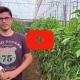 Youtube Cómo combatir el pulgón en Pimiento con Arias - Prueba inicial - Ecamed Ecología Agrícola del Mediterráneo